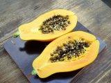 Carica papaya (papája obecná) - Foto: T. Procházka